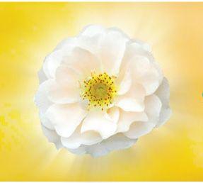 DCF-logo-rose-gold-background